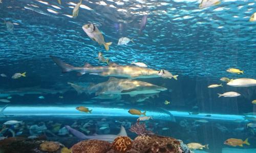トロント 動物園キャンプ